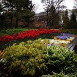 Blütenpracht im Schlosspark des Oberen Schlosses Siegen